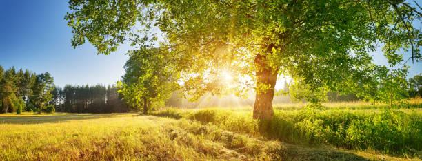 여름에 햇빛과 아름다운 아침 빛에 나무 단풍 - 경관 뉴스 사진 이미지