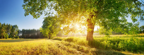 tree foliage in beautiful morning light with sunlight in summer stock photo