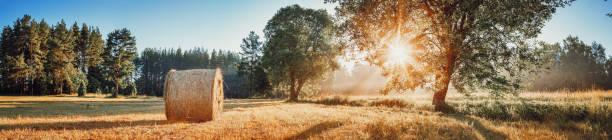 Tree foliage in morning light stock photo
