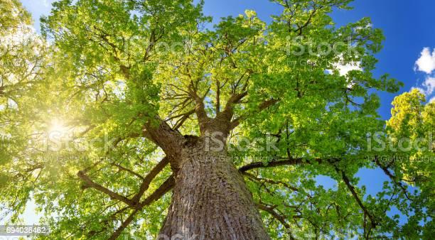 Tree foliage in morning light picture id694036462?b=1&k=6&m=694036462&s=612x612&h=sgido agflsftq3mzrkw248jzgnso5xtmxsyeb0ki88=