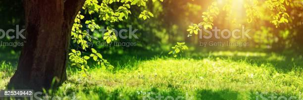 Photo of Tree foliage in morning light