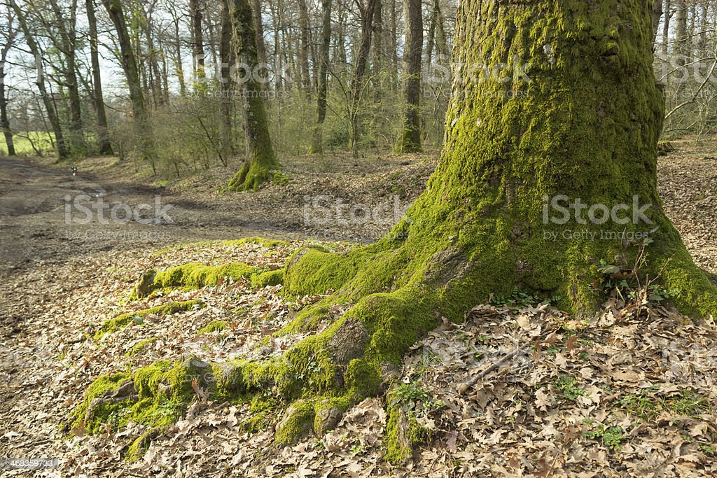 Tree foot royalty-free stock photo