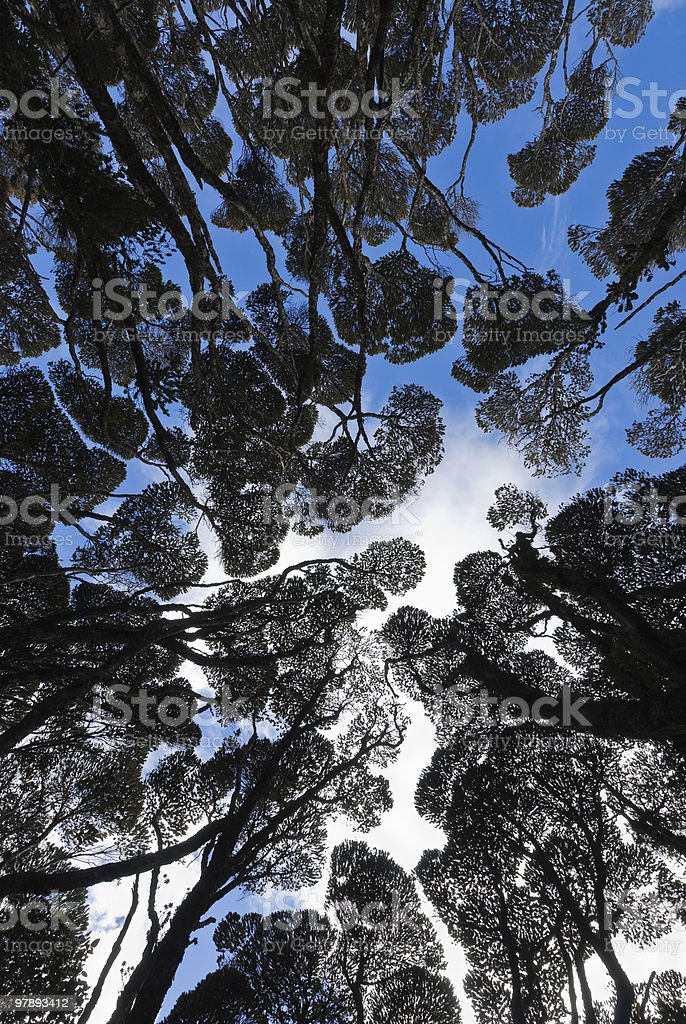 Tree forest royalty-free stock photo