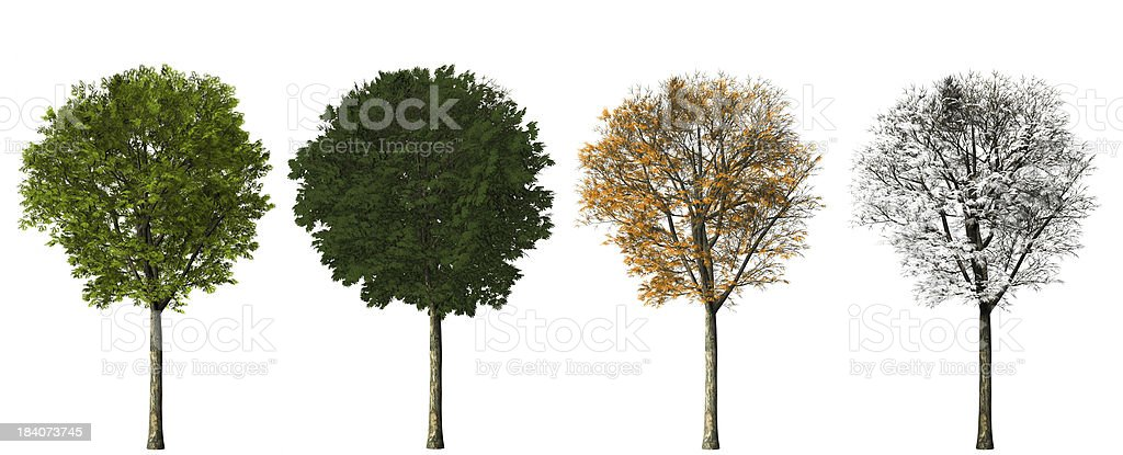 tree - four seasons stock photo