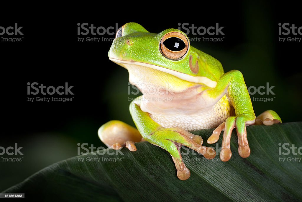 Tree frog in natural environment stock photo