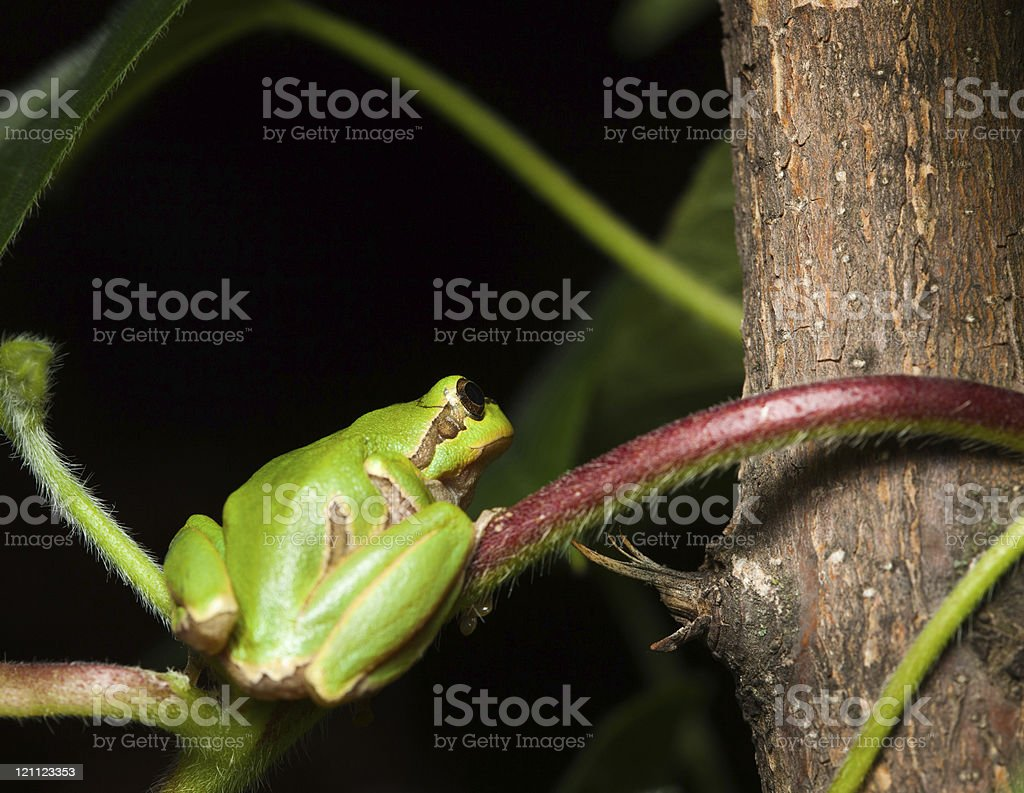 Tree frog sitting on branch stock photo