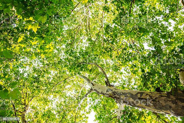 Photo of Tree from below
