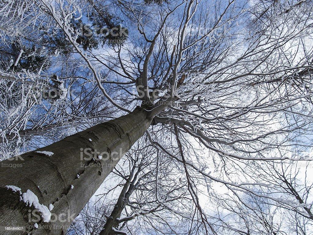 Tree from the bottom royalty-free stock photo
