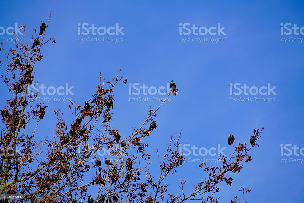 Tree Full Of Birds Stock Photo Download Image Now Istock
