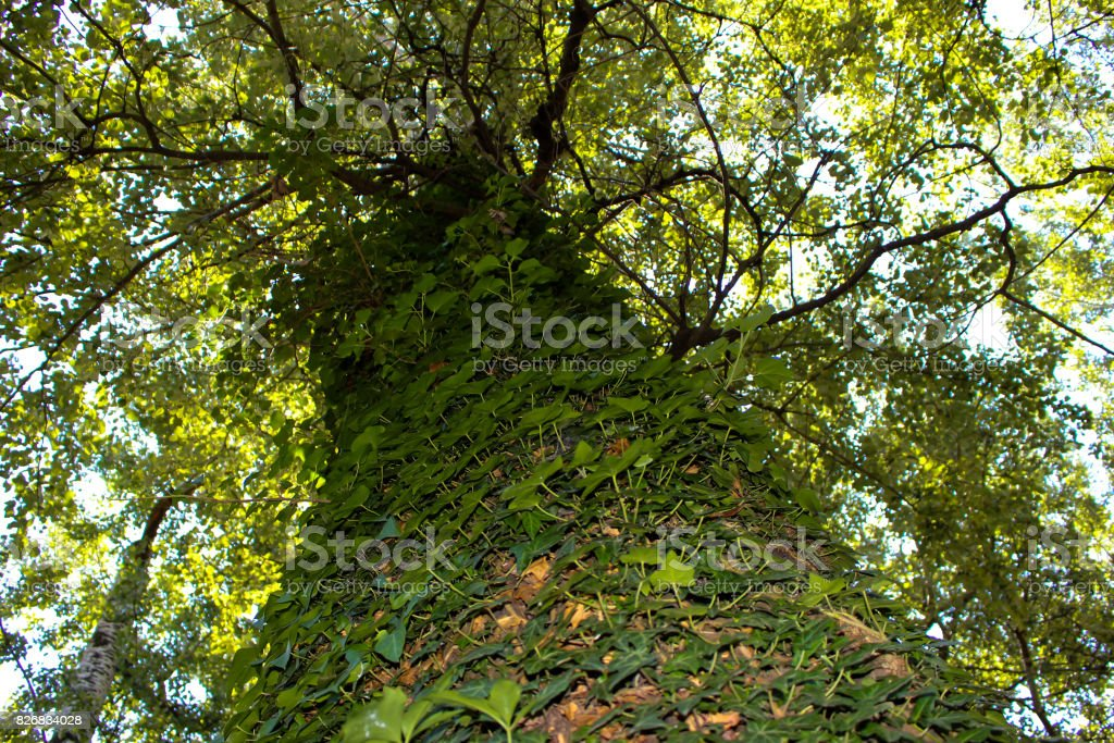 A tree full of foliage 2 stock photo