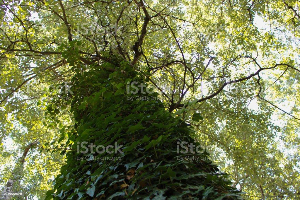 A tree full of foliage 3 stock photo