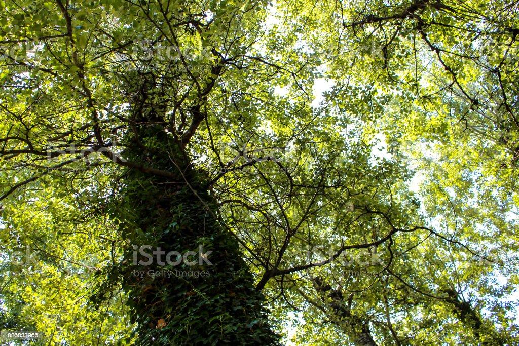 A tree full of foliage stock photo