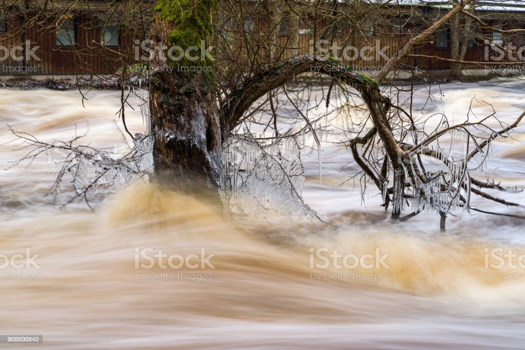 Tree full of icicles during flood stock photo