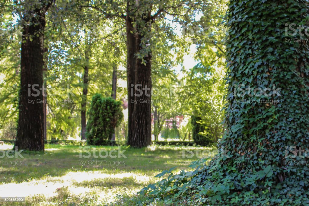 A tree full of leafs stock photo