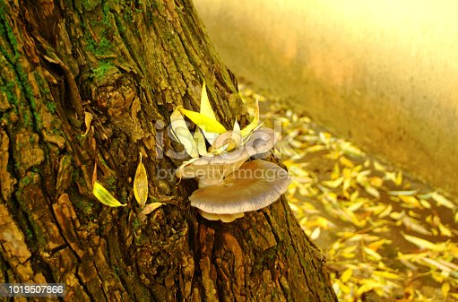 istock tree fungus grows on a tree in autumn 1019507866
