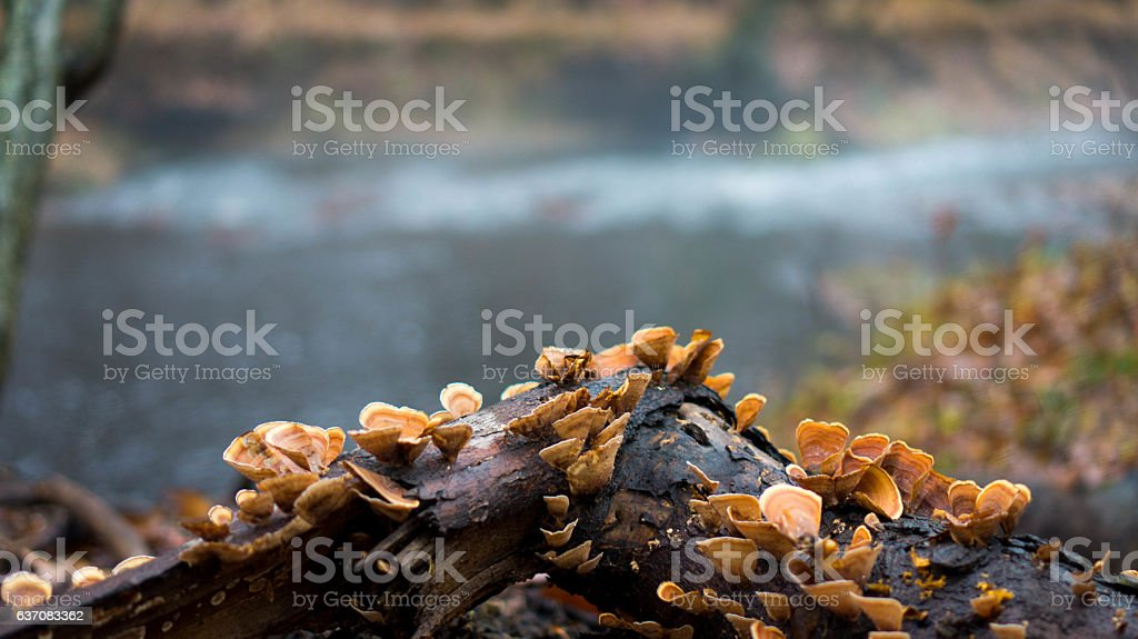 Tree Fungus stock photo