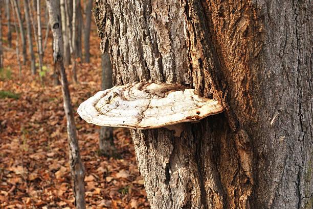 Tree fungus stock photo