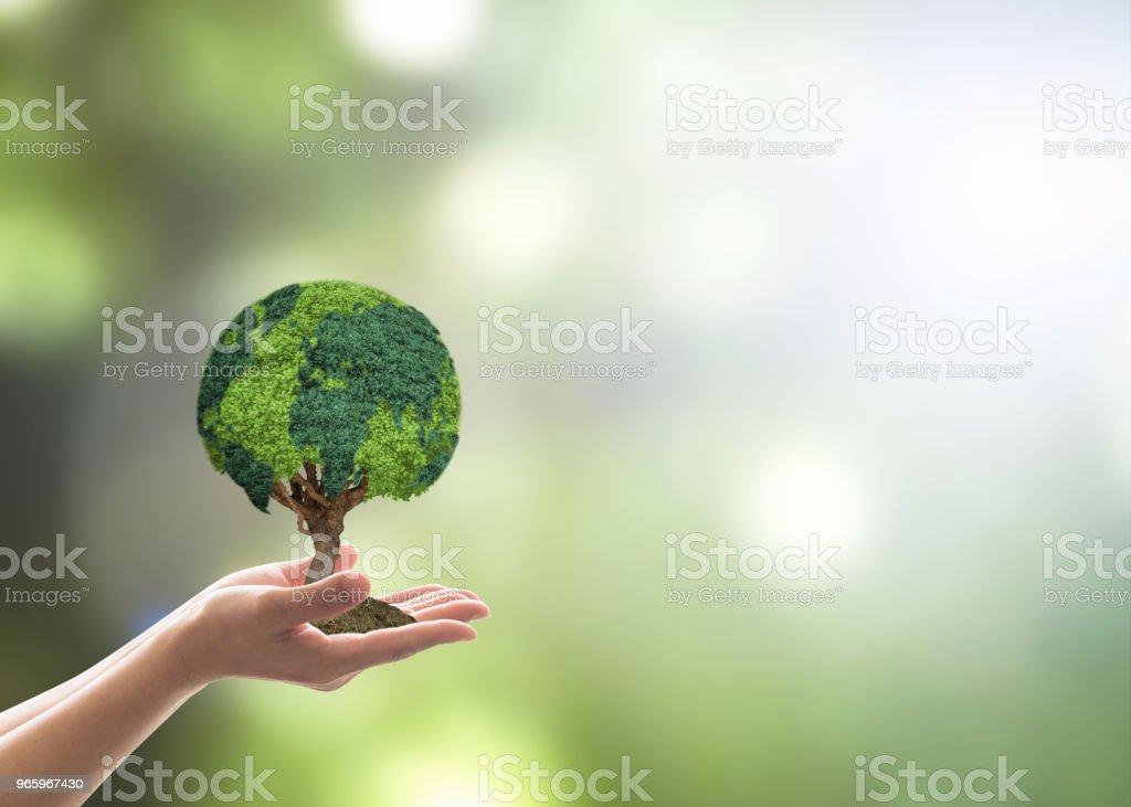 Träd världen växer på volontärens hand för earth day, hållbar miljö skydd kampanj och naturligt bevarande begrepp - Royaltyfri Ansvar Bildbanksbilder