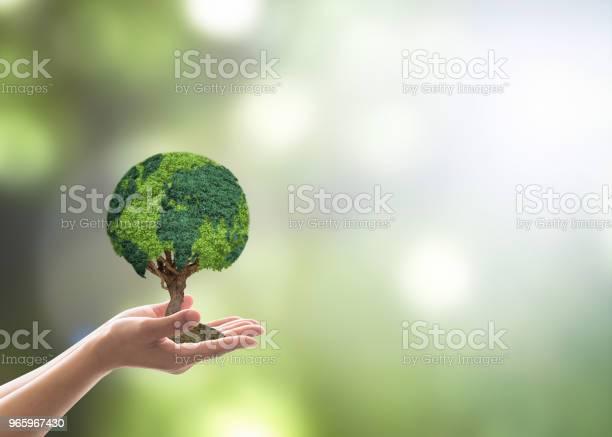 Träd Världen Växer På Volontärens Hand För Earth Day Hållbar Miljö Skydd Kampanj Och Naturligt Bevarande Begrepp-foton och fler bilder på Ansvar