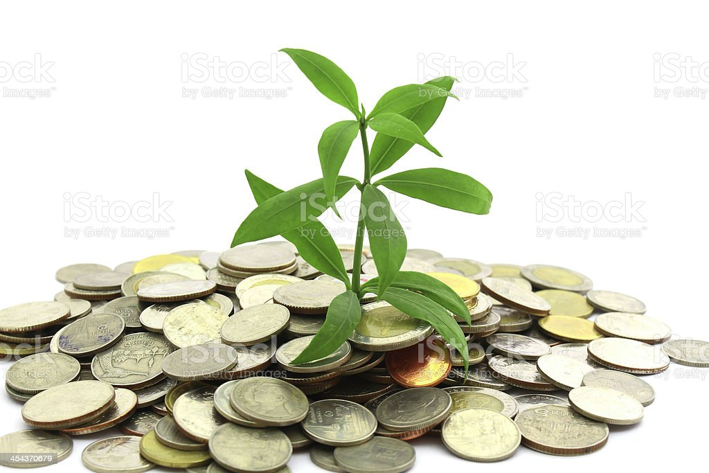 Tree growing from coins stock photo