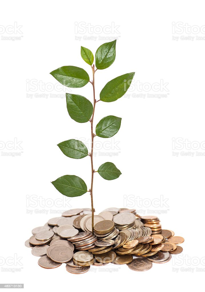 Tree growing from pile of coins isolated stock photo