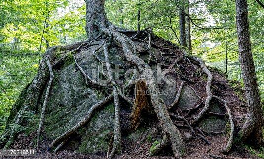175407085istockphoto Tree growing in boulder 1170216511
