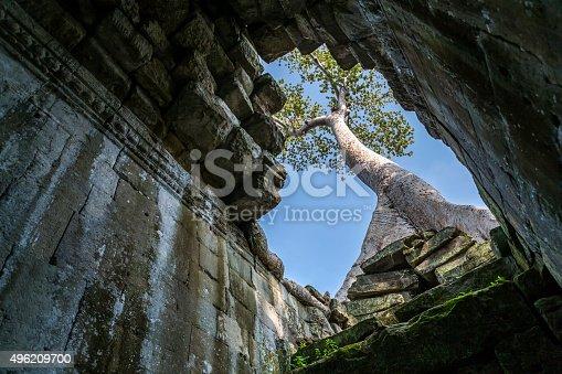 478956028istockphoto Tree growing in Preah Khan temple in Angkor Wat site 496209700