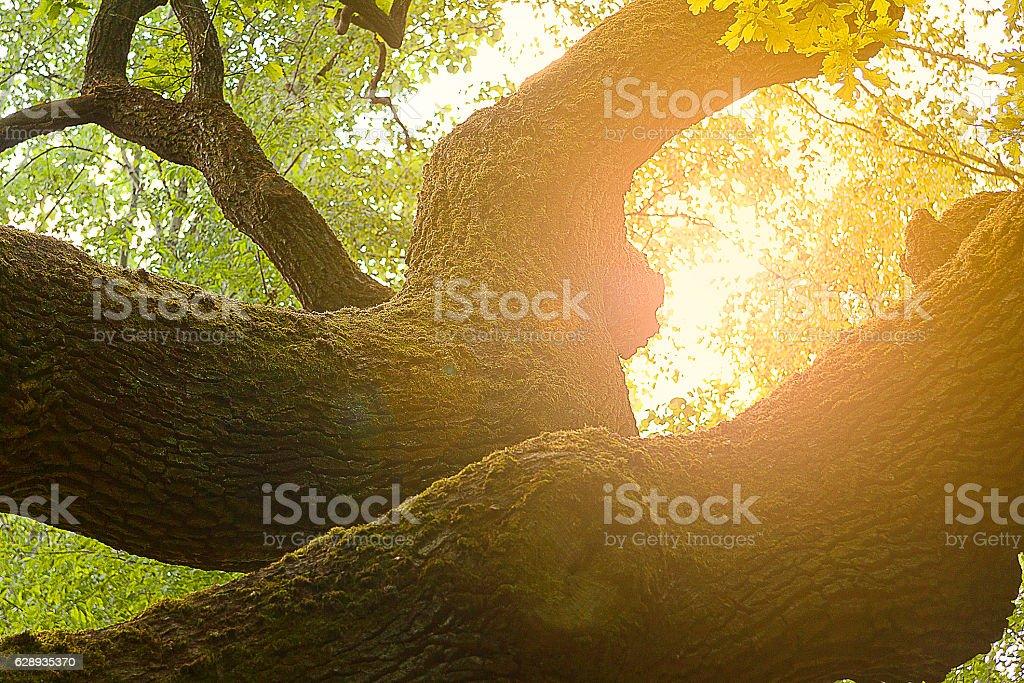 Tree growing in the sun – zdjęcie