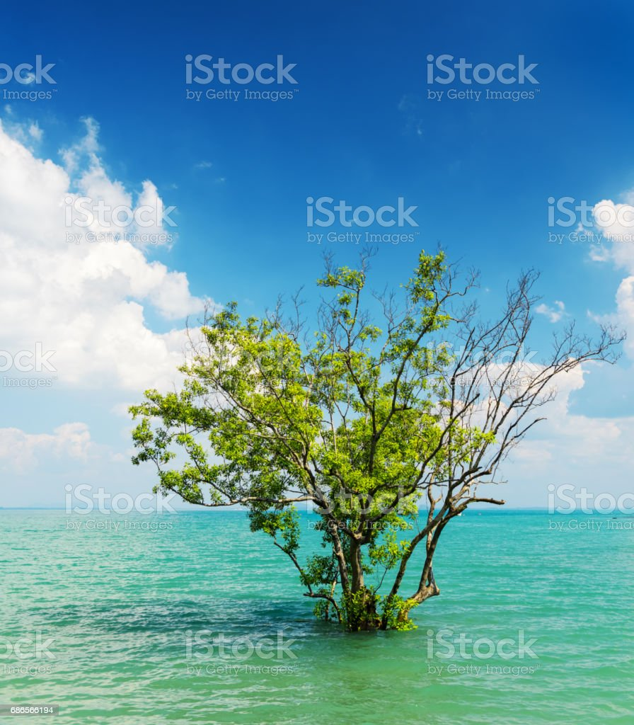 Tree growing in the water royalty-free stock photo