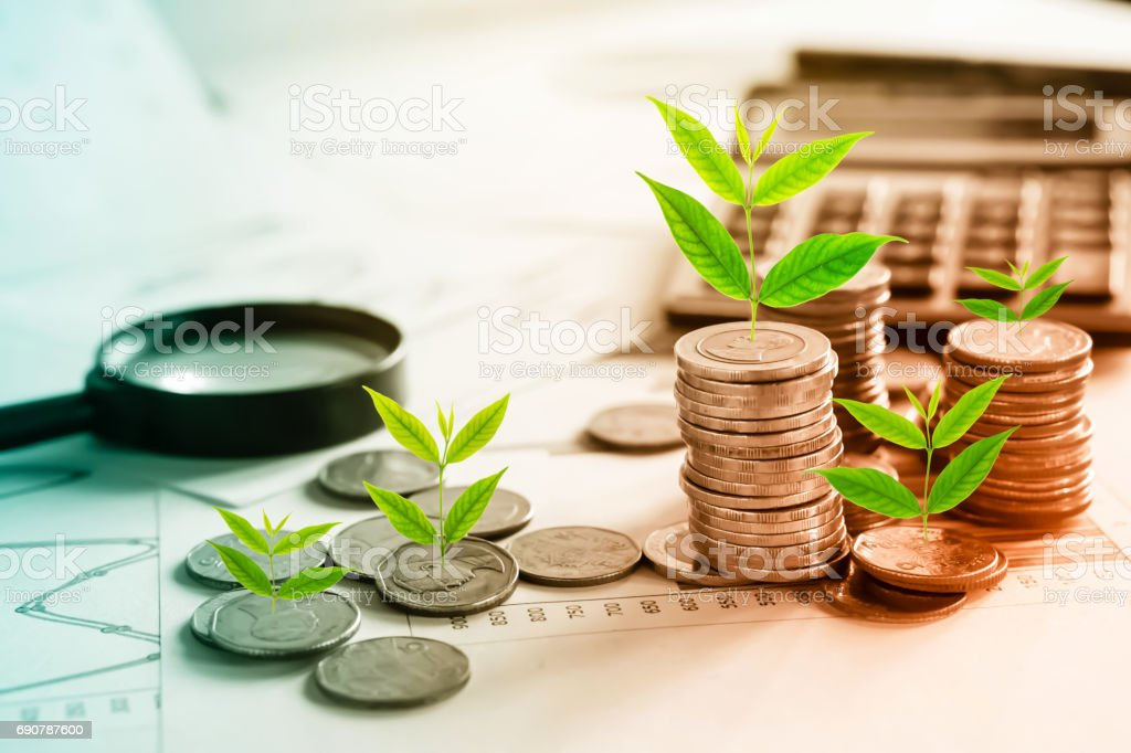 tree growing on coins idea for growing business concept stock photo