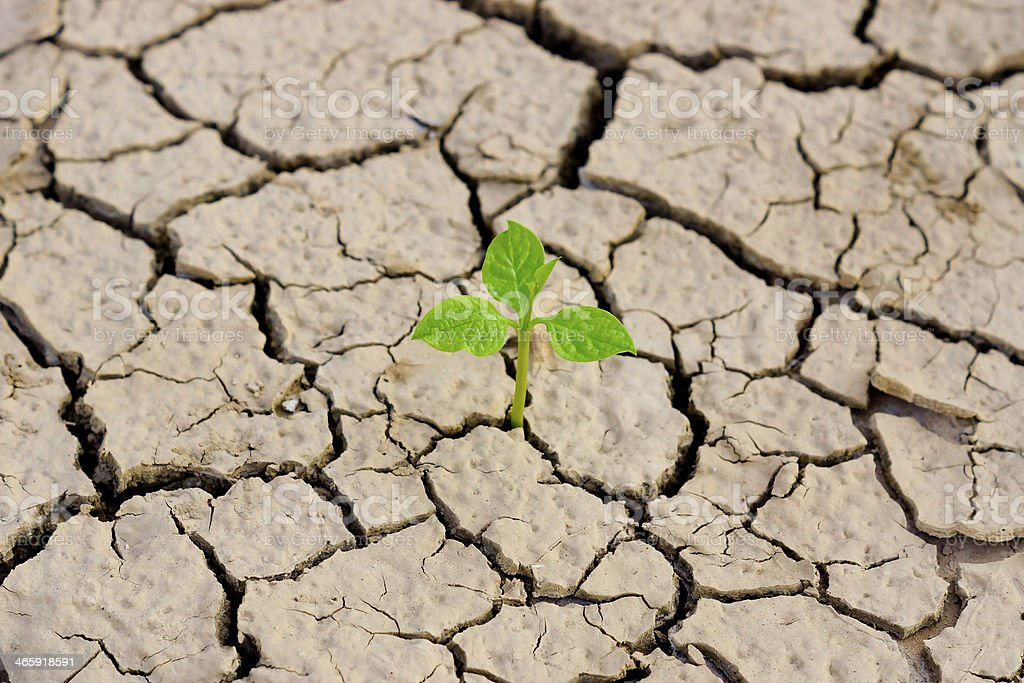 tree growing on cracked earth stock photo