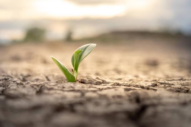 boom groeit op gekraakte grond. crack gedroogde bodem in droogte, getroffen door de opwarming van de aarde gemaakt klimaatverandering. water tekort en droogte concept - new world stockfoto's en -beelden
