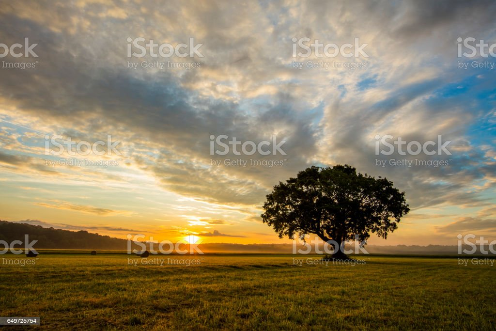 Tree growing on grassy field against cloudy sky stock photo