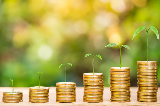 Tree growing on one dollar coins arranged as a graph on wood table with natural bokeh background, concept of business growth and saving money