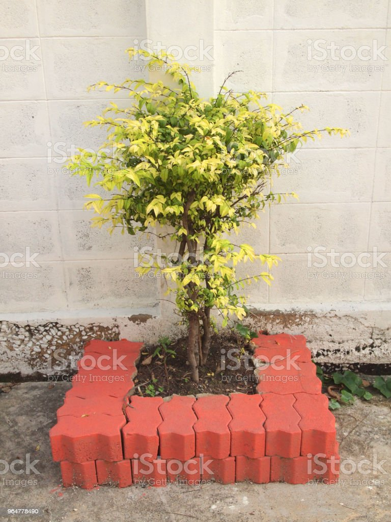 tree growing on soil royalty-free stock photo