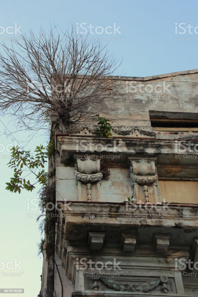 Tree growing out of the side of a building in Havana, Cuba stock photo