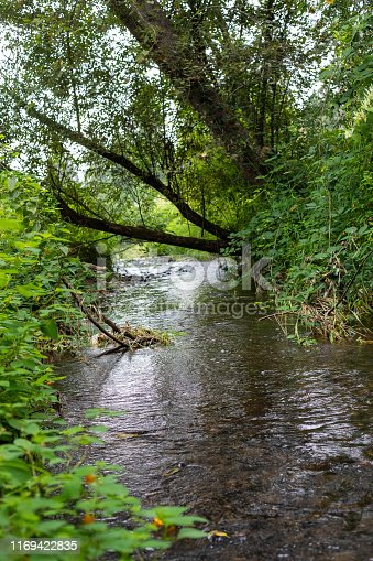 Tree growing over a creek