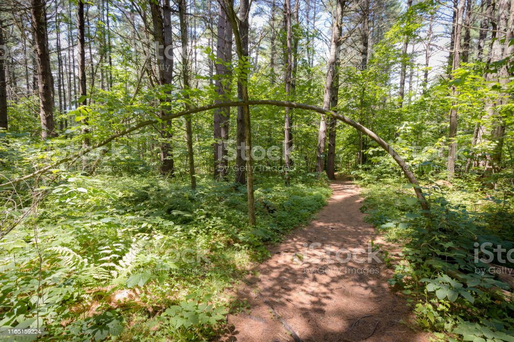 Tree Growing Over Trail - Royalty-free Adirondack Mountains Stock Photo