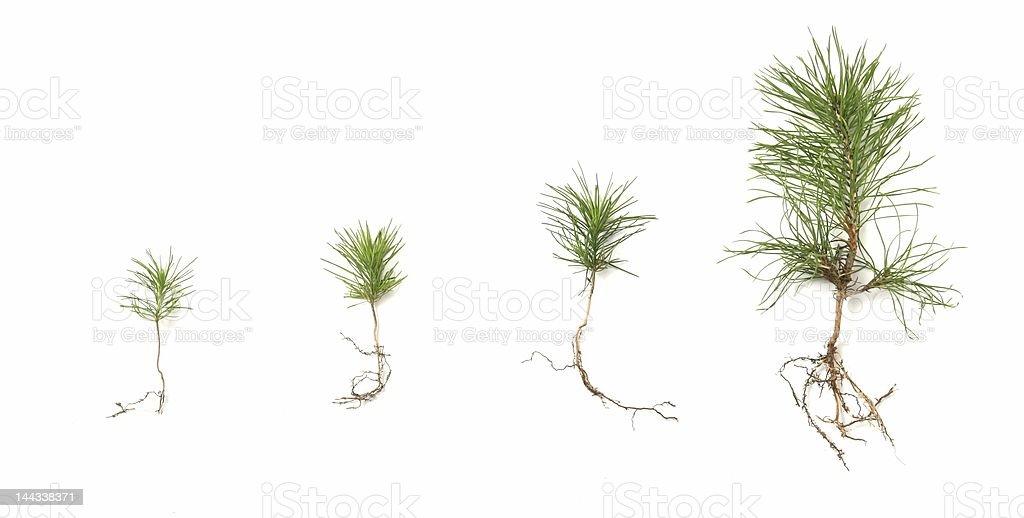 Tree growing stock photo