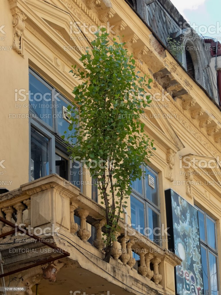 A tree grows in a crack in the balcony of a neglected building in the old town center in Bucharest, Romania stock photo