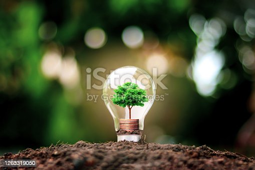 Tree grows in light bulbs, energy-saving and environmental concepts on Earth Day.