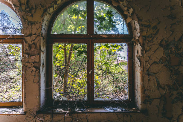 A tree grows through a ruined window stock photo