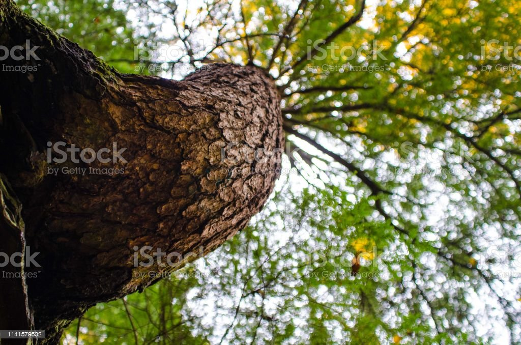 A tree grows up and out of a rock stock photo