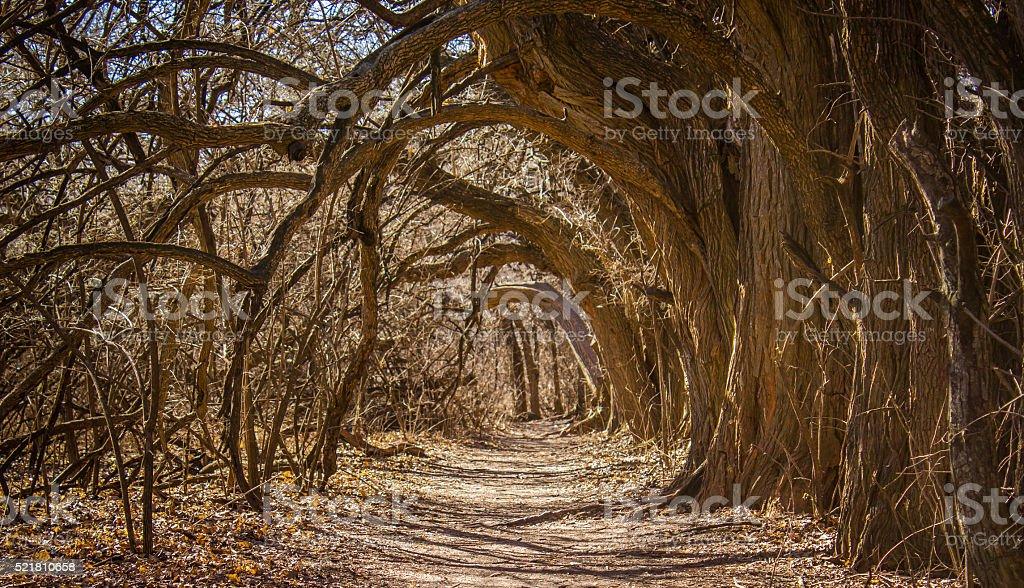 Tree Hallway stock photo