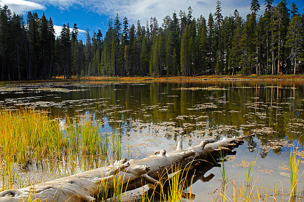 Tree has fallen in Yosemite National Park on a lake stock photo