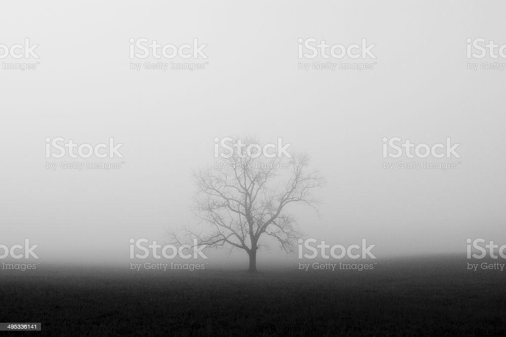 Tree hidden in the fog stock photo