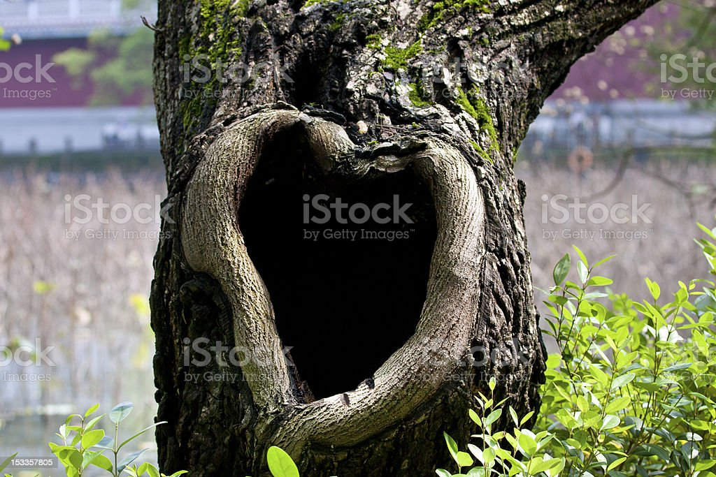 tree hole royalty-free stock photo