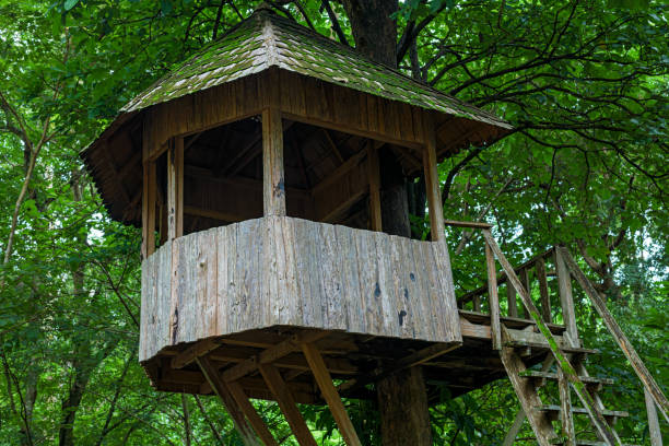 Tree house in deep forest. Tree house in deep forest. old treehouse stock pictures, royalty-free photos & images