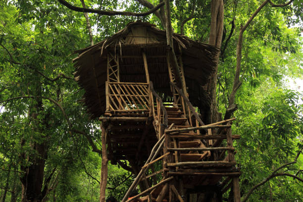 A Tree house in the forest stock photo