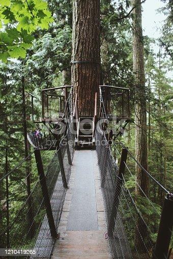 820775686 istock photo Tree house 1210419265